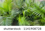 green plant with big leaves | Shutterstock . vector #1141908728