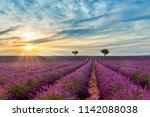 lavander field in valensole in... | Shutterstock . vector #1142088038