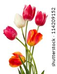 Stock photo tulips six flowers isolated on white 114209152
