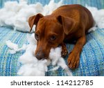 Stock photo naughty playful puppy dog after biting a pillow tired of hard work 114212785
