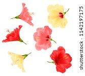 flowers tropical plant ...   Shutterstock .eps vector #1142197175