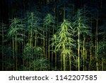 hemp plant field   cannabis...   Shutterstock . vector #1142207585