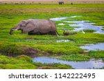 elephant with an elephant.... | Shutterstock . vector #1142222495
