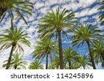 Blue Sky Palm Trees In Tropica...
