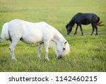 two ponies grazing on green... | Shutterstock . vector #1142460215