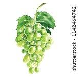 hand drawn watercolor grapes... | Shutterstock . vector #1142464742