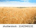 Wheat Grain Field On Sunny Day. ...