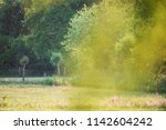 trees and meadow in countryside ...   Shutterstock . vector #1142604242