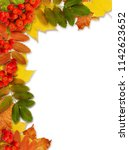 autumn rowanberries and leaves... | Shutterstock . vector #1142623652
