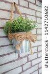 a little plant in coffee shop | Shutterstock . vector #1142710682