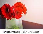 red gerbera daisy flowers in a... | Shutterstock . vector #1142718305