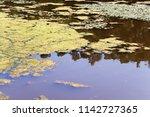 Closeup Of An Algal Bloom In A...