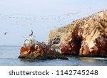 aquatic birds at paracas...   Shutterstock . vector #1142745248