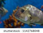 undersea world. beautiful coral ...   Shutterstock . vector #1142768048