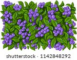 set illustration with blueberry ... | Shutterstock .eps vector #1142848292