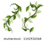 Graphic cartoon detailed green rose branch, stem with leaves, thorns and shadows. Isolated on white background. Vector icon set. Vol. 3
