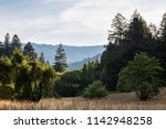 A meadow is surrounded by forest in Humboldt State Park, found along the coast of Northern California. This area is home to the world's largest old-growth Sequoia trees. - stock photo