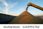 combine harvesting corn and... | Shutterstock . vector #1142951762