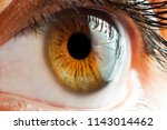 brown eyes girls close up in... | Shutterstock . vector #1143014462