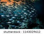 big school of trevally jack... | Shutterstock . vector #1143029612