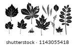isolated black leaves. | Shutterstock .eps vector #1143055418