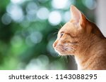 side of ginger cat looking... | Shutterstock . vector #1143088295