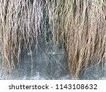 banyan tree roots background   Shutterstock . vector #1143108632