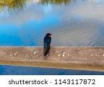 a dainty delightful  little... | Shutterstock . vector #1143117872