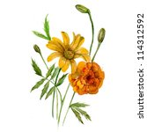 watercolor flowers illustration ... | Shutterstock . vector #114312592