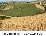 view of olive groves on... | Shutterstock . vector #1143224528