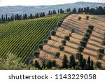 panoramic view of olive groves  ... | Shutterstock . vector #1143229058