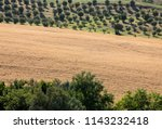 view of olive groves and... | Shutterstock . vector #1143232418