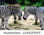 animals wildlife photography  | Shutterstock . vector #1143253955