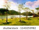 animals wildlife photography  | Shutterstock . vector #1143253982