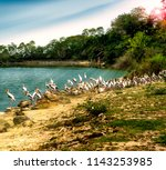 animals wildlife photography  | Shutterstock . vector #1143253985