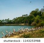 animals wildlife photography  | Shutterstock . vector #1143253988