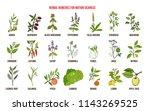 best herbal remedies for motion ... | Shutterstock .eps vector #1143269525