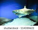 carcharhinus melanopterus   one ... | Shutterstock . vector #114330622