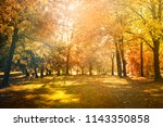 maple leaves tree natural... | Shutterstock . vector #1143350858
