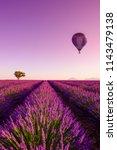 lavender field rows at sunrise... | Shutterstock . vector #1143479138