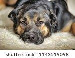 an elderly sad dog alone waits | Shutterstock . vector #1143519098