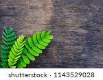 creative 3 green tamarind...   Shutterstock . vector #1143529028