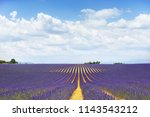 the flowering of lavender in...   Shutterstock . vector #1143543212