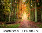 breathtaking path in the autumn ... | Shutterstock . vector #1143586772