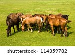 Horses Standing Together Some...