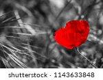 Poppy Flowers  Black And White  ...