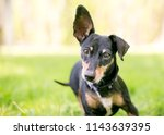 a small mixed breed dog with...   Shutterstock . vector #1143639395