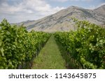 Stock photo slovenian wine is wine from slovenia viticulture and winemaking has existed in this region since 1143645875