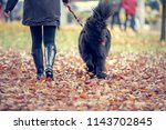 autumnal walk with the dog... | Shutterstock . vector #1143702845