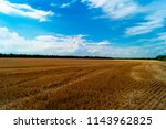 field after harvest with traces ... | Shutterstock . vector #1143962825
